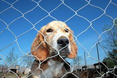 Why a Shelter Dog Should Be Your Next Best Friend | The Dogington Post