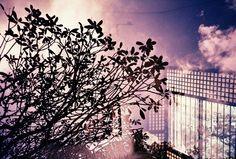 http://www.lomography.com/photos/15200670