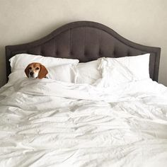 The rumpled bed linens and tufted, upholstered headboard are an enticing invitation for Meghan Markle's pup, Guy, to cuddle up. | Photographer: Courtesy of Meghan Markle