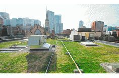 Green Roofs Add Natural Beauty and Environmental Benefits to Urban Buildings | Vitality Magazine | Toronto Canada alternative health, natura...