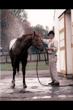 Secretariat  ...LOVED this horse. He was truly a gifted and blessed athlete. Anyone lucky enough to have met him, knew they touched an angel from God.
