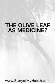 The #oliveleaf as medicine: it has powerful abilities to protect against age related diseases, promote healthy #gut flora, and strengthen your #immunesystem.