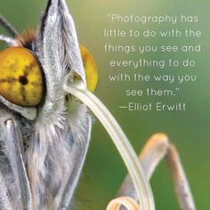 This moth is wearing its long tongue loud and proud unapologetic about who he is--just like the best photographers are unapologetic about their vision. How do you show the world your vision? #upclosebooks