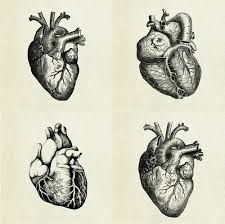 Anatomic hearts