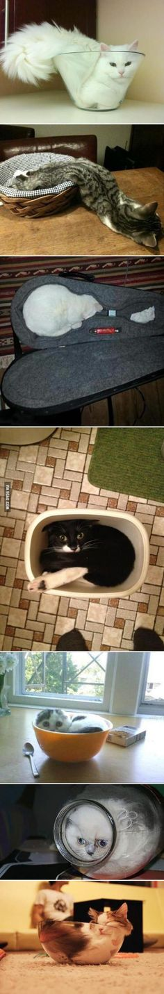 Cats are...fluid
