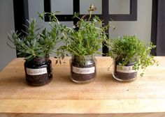 A Baby Food Jar Herb Garden - love this idea for Miss Things window ledge