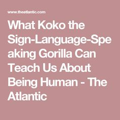 What Koko the Sign-Language-Speaking Gorilla Can Teach Us About Being Human - The Atlantic