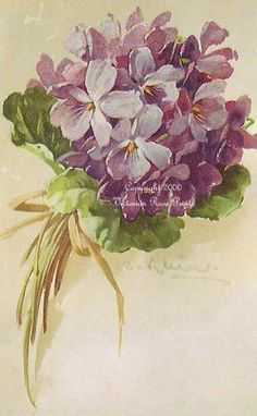 2 PRINT s FREE SHIP Sweet French Violets C. Klein