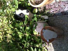 Murphy under willow