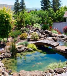 above the beautiful koi pond Natural