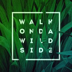 #jules #walkonthewildside #wild #photography #jungle #typography #typism #paper #photoshop #project #lettering #customlettering #customtype #graffiti #graphics #graphicdesign #pattern #texture #handmade #painting #urbanart #urban #green #print #design #artwork #square