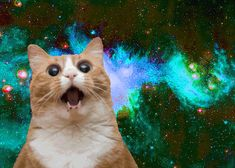 Cat screaming in space. This might literally be the funniest thing I've ever seen.