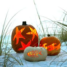 Carve a Coastal Pumpkin ~~~