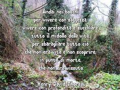 Andai nei boschi per  vivere con saggezza, con profondità e succhiare tutto il midollo della vita, per sbaragliare tutto ciò che non era vita e non scoprire, in punto di morte, che non ero vissuto. Henry David Thoreau.