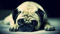 http://www.chrassus.com/wp-content/uploads/2013/07/imagenes-de-animales-tristes-1.jpg