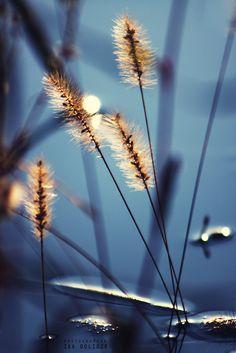 ** Blue & brown