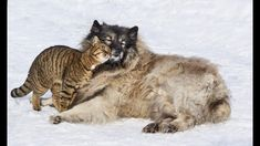 Unbelievable Unlikely Animal Friendships Compilation 2018https://www.youtube.com/attribution_link?a=mY_y_mppNYA&u=%2Fwatch%3Fv%3DSFfmewqwNVc%26feature%3Dshare