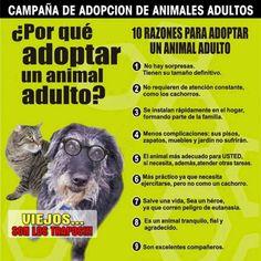 Campaña de adopción de animales adultos