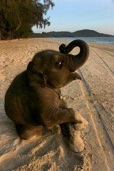 Baby elephant on beach