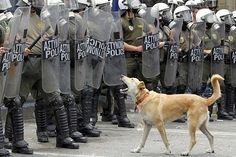 "Greece's famous riot dog ""Loukanikos""."