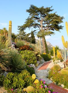 The exotic garden of Eze (06)