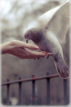 ♡ birds of peace ♡ . X ღɱɧღ We Are The World, Mundo Animal, Photos, Pictures, Bird Feathers, Pigeon, Belle Photo, Beautiful Birds, Pet Birds
