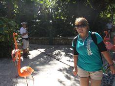 Paseo diario de los Flamingos