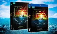 Groupon - BBC Life 4-Disc DVD or Blu-ray Set Narrated by Oprah Winfrey. Free Returns.  in Online Deal. Groupon deal price: $12.99