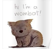 cute wombat illustration - Google Search Happy Animals, Cute Animals, Cute Wombat, Xmas Pictures, Australia Animals, Cute Animal Illustration, Quokka, Kids Cards, Totoro