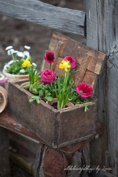 Antique box full of potted flowers.
