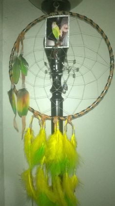 Item details 5 out of 5 stars.      (323) reviews Shipping & Policies The Chartreuse Parrot Dream Catcher  Is a Custom made to order dreamcatcher which has feather coloring similar to the...@ artfire