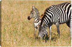 Zebra Mare And Foal art print