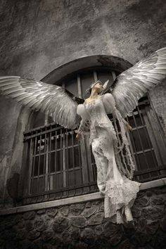 Image result for angel spreading wings tumblr