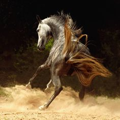 Impressive and Powerful Horses Photos – Fubiz Media