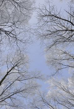 Голубое зимнее небо Петербурга.