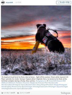 空港の安全を守る「ゴーグル犬」彼にしかできない特別な任務とは? | TABI LABO