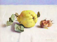 henk helmantel 20II  quince and medlars  galerie artveras geneve