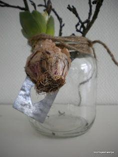 Flowerbulb and glassjars DIY