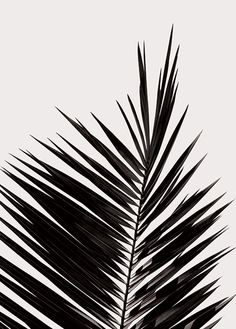Find posters by Coco Lapine Design and other art prints from designers, artist…