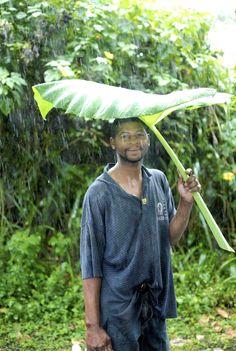 São Tomé - Tropical umbrella