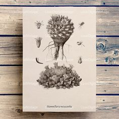 #LizasDigitalVintage Cactus print Cactus decor Botanical chart by LizasDigitalVintage