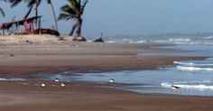 Saindo de Aracaju, em Sergipe, o trajeto até Mangue Seco dura cerca de uma hora e meia