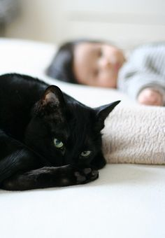 Remind's me of our cat we had when Jasmine was a baby.She(Shadow), would lay right next to her...usually with her head on her shoulders.SO SWEET!!!
