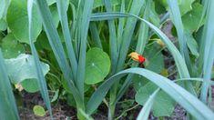 Urban Gardening - Learning How To Garden Like A Pro! Potager Garden, Herb Garden, Vegetable Garden, Gardening For Beginners, Gardening Tips, Garden Online, Plantation, Garden Crafts, Horticulture