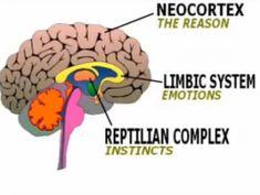 reptilian brain | The Reptilian, Mamalian and Visual Brain | Success, Meaningful ...