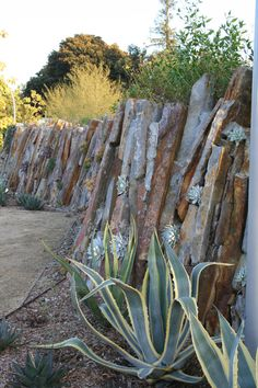 Cracks and crevices between stones in the undulating Living Wall provide planting pockets for succulents and habitat for spiders, snails, an...