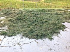 Using Lawn Hay   Temperate Climate Permaculture