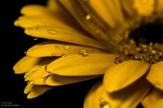 A Tiny Drop by Claudia Samples on 500px
