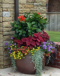 Combinaciones de plantas | Cuidar de tus plantas es facilisimo.com #containergardening