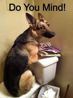 LOL #German #Shepherd